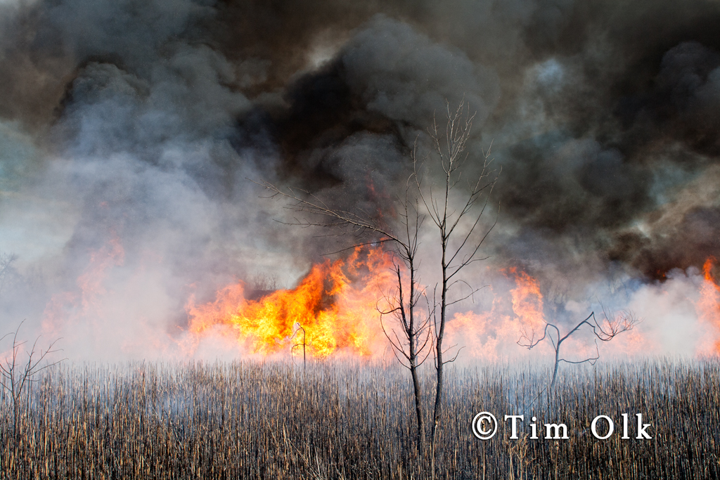 controlled prairie burn in South Elgin