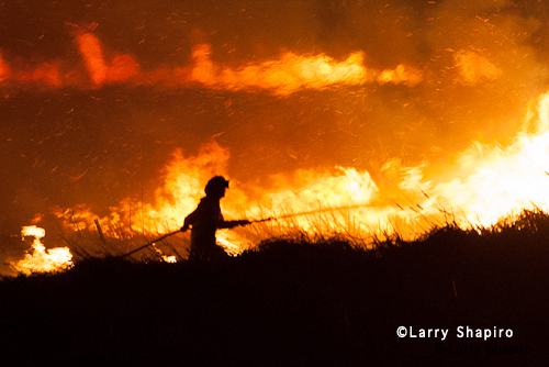 large brush fire in near Palatine IL Cook County Forest Preserve District 3-10-12