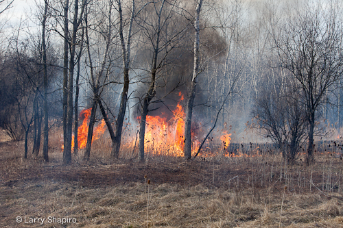 Potawatami Woods brush fire 3-11-12 Prospect Heights Fire Department