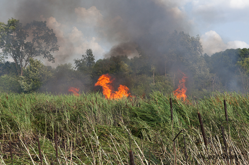 Wildland fire in Long Grove 7-4-12 from fireworks results in arrest