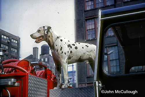 Buff the firedog at Chicago Engine 5's quarters