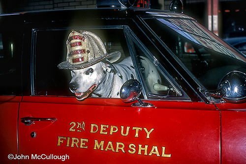 Buff the firedog in Deputy Chief's car (217) and helmut.