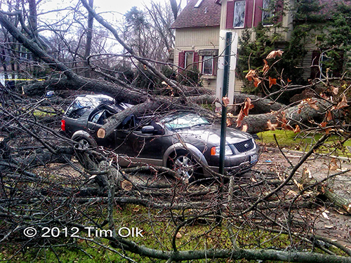 tree crushed car in Wilmette 11-23-12