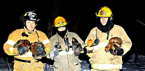 firemen rescue chickens from house fire