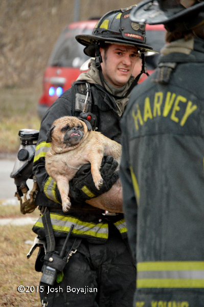 fireman carries dog from house fire