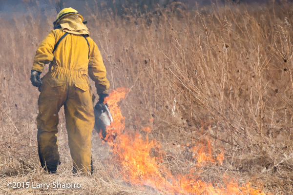 wildland firefighter uses drip torch in field