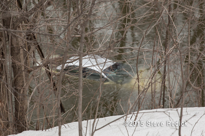 car submerged in the Des Palines River