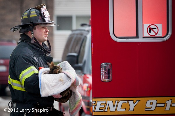 fireman rescues cat from fire