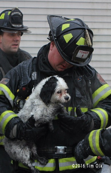 firefighter rescues dog from fire