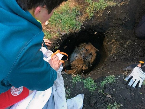 dog trapped in a sinkhole