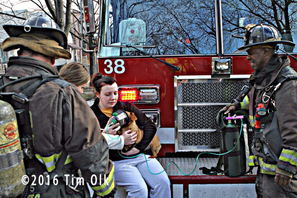 pet gets oxygen after fire