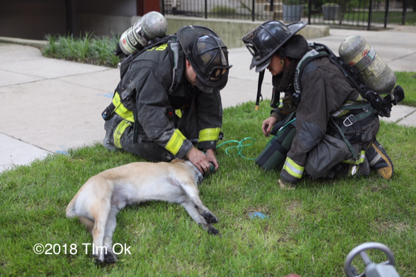 Firefighters administer oxygen to a dog
