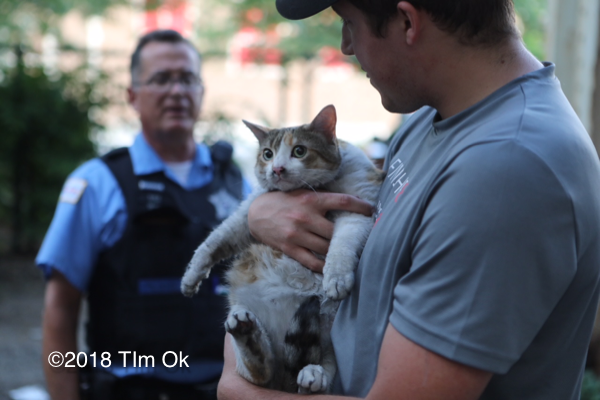 cat rescued from apartment fire