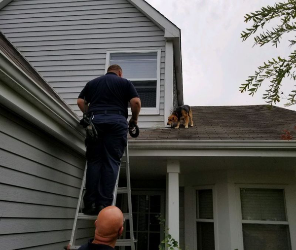 Firefighters rescue dog from the roof of a house