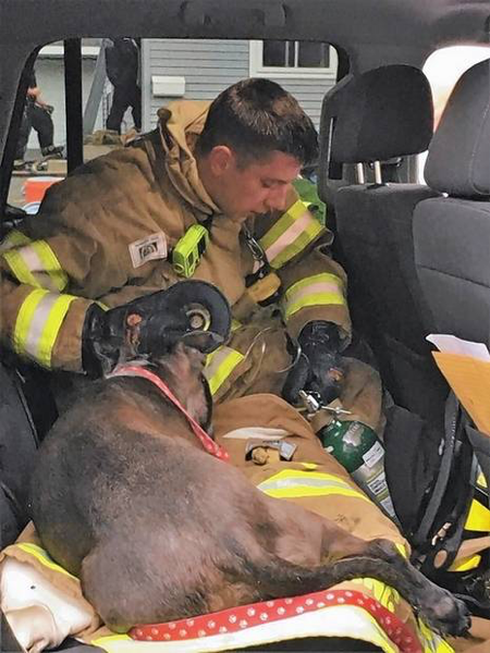 Firefighter gives oxygen to a dog rescued from a house fire