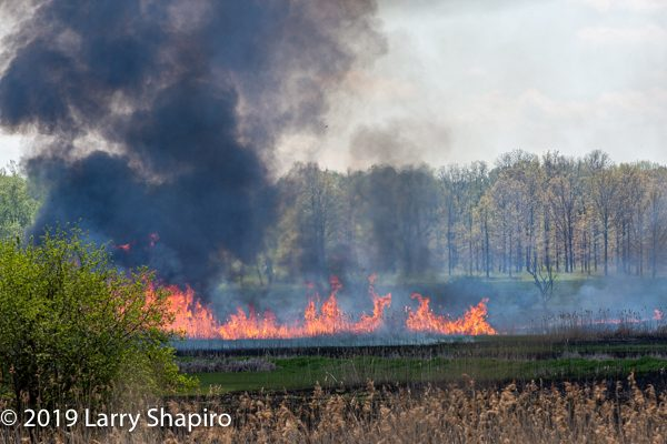 Deer Grove Forest Preserve brush fire 5-15-19
