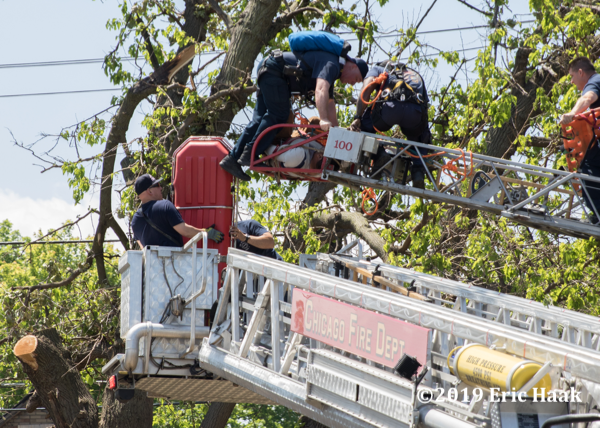 Chicago firefighters rescued an injured tree series worker dangling from a tree