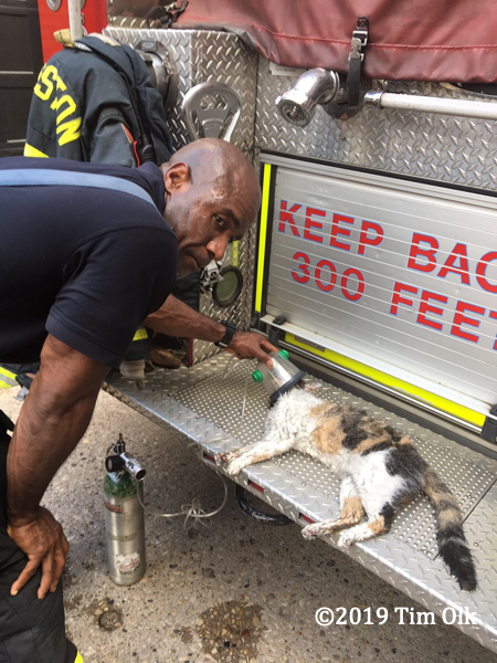 cat pulled from apartment fire