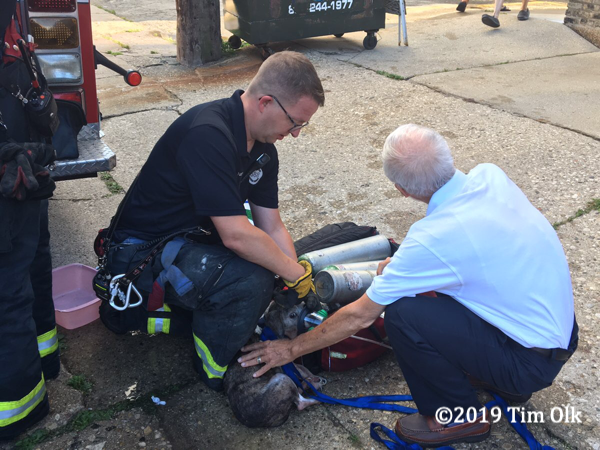 dog pulled from apartment fire