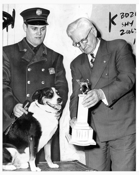 Chicago Fire Department dog receives award