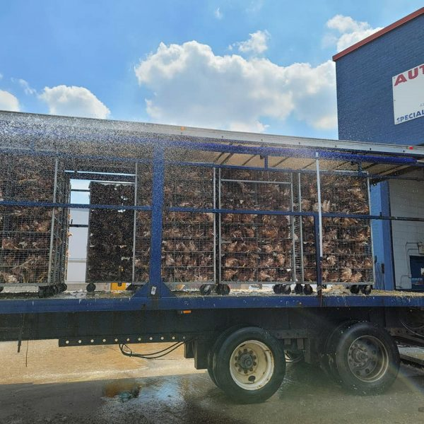 Addison Firefighters cool down a truck load of chickens stranded in excessive heat